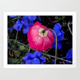 Dewdrop Flower Art Print