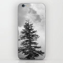 Bristlecone Pine Tree, Bryce Canyon, Utah 2013 iPhone Skin