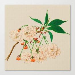 Fugen's Elephant Cherry Blossoms Canvas Print