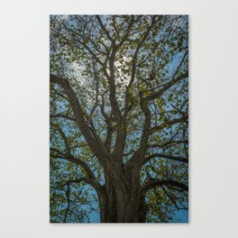 Reaching For Light Canvas Print