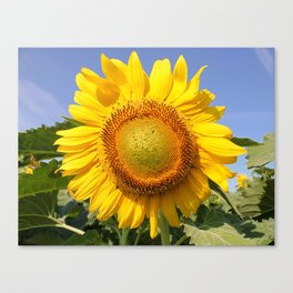 View the Sun! Canvas Print