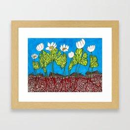 Bloodroots - Sanguinaria canadensis Framed Art Print