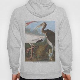 White ibis, Birds of America, Audubon Plate 222 Hoody