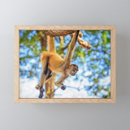 Just Hanging Around Framed Mini Art Print