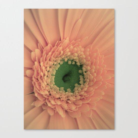 Peach Love Canvas Print