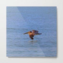 Pelican Flying Metal Print