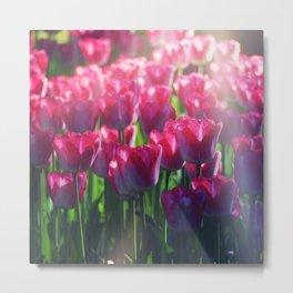 Tulips Field 41 Metal Print
