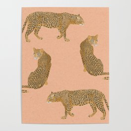 sunset leopards Poster