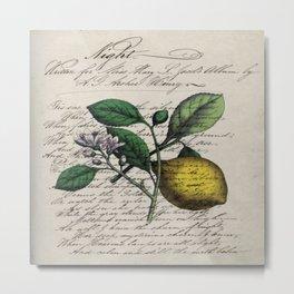 vintage Mediterranean summer fruit orchard citrus blossom yellow lemon Metal Print