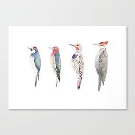Woodpeckers, Sapsucker, Flicker Canvas Print