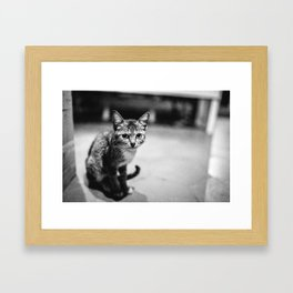 Hungry girl Framed Art Print