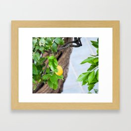 Italian Lemon Tree Framed Art Print