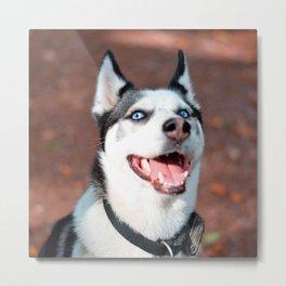 Siberian Husky dog face Metal Print