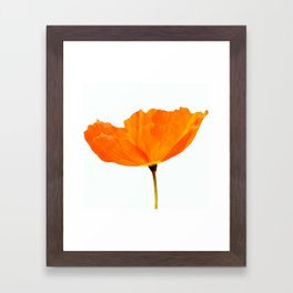 One And Only - Orange Poppy White Background #decor #society6 #buyart Framed Art Print