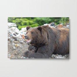 Trash Bear Metal Print