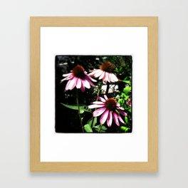 Coneflowers Framed Art Print
