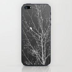 Modern Winter iPhone & iPod Skin