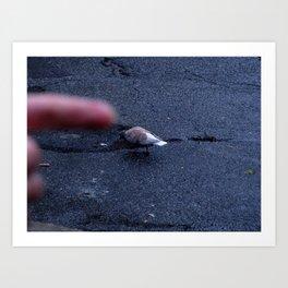 Pigeon Points. Art Print