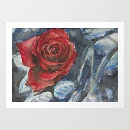 Water Color Rose Study  Art Print