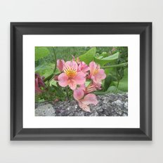 small flowers of tenerife Framed Art Print