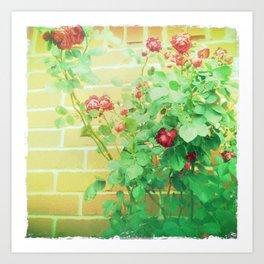 Grandma's roses Art Print