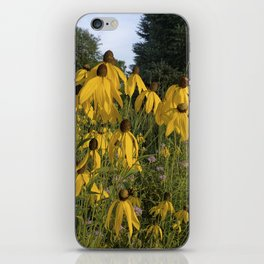 Prairie coneflower iPhone Skin