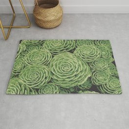 Succulents | Aeoniums | Garden Plants | Pot Plants | Rug