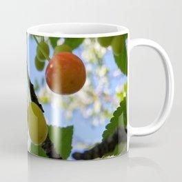 First Blush--Ripening Cherries Coffee Mug