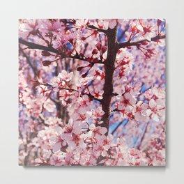 Pink Flowering Crabapple Tree Blooms Metal Print