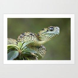 Hairy Bush Viper (Atheris hispida) Art Print