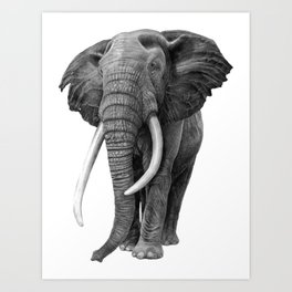 Bull elephant - Drawing in pencil Art Print