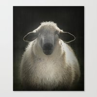 sheep Canvas Prints featuring Sheep by Monika Strigel