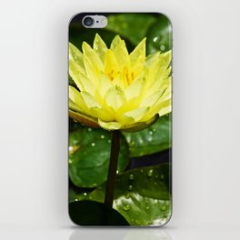 Yellow Water Lily with Raindrops iPhone Skin