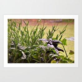 Herbal Garden Delight Art Print