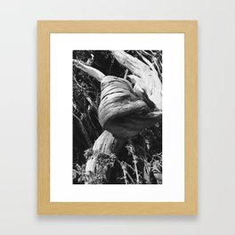 Gnarled Tree Framed Art Print