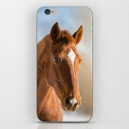 Brown Horse Winter Sky iPhone Skin