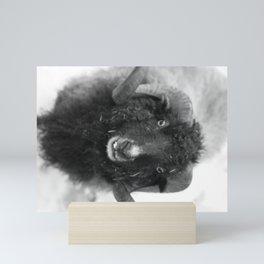 The black sheep, black and white photography Mini Art Print