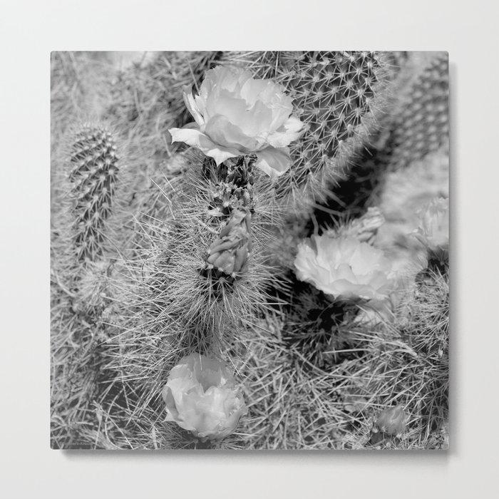 Hedgehog Cactus In Bloom II - Black and White Metal Print