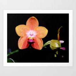2nd Magenta Peachy Phalaenopsis Orchid Pastel Art Print