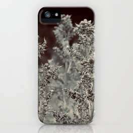 A walk in the forest iPhone Case