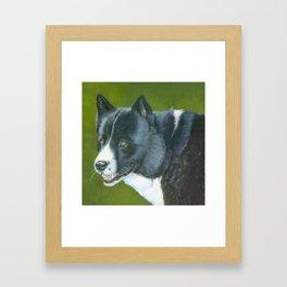 Karelian beardog Framed Art Print