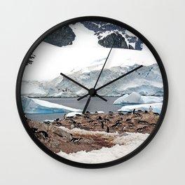 Gentoo Penguin Colony Wall Clock
