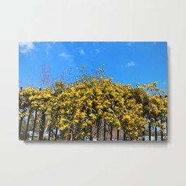 Cat's Claw Vine Over Fence Metal Print