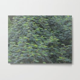 Presidio, SF Foliage Metal Print