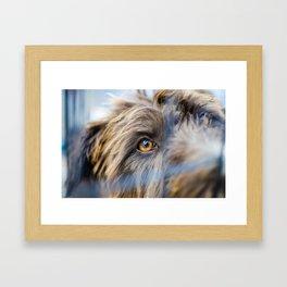 Dog's eye Framed Art Print