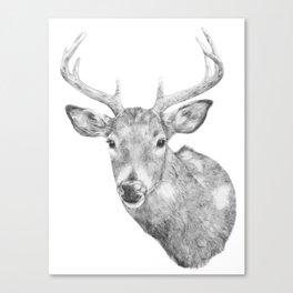 Deer Head Canvas Print