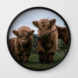 Scottish Highland Cattle Calves - Babies playing II Wall Clock