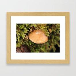 In amongst the Mosses Framed Art Print