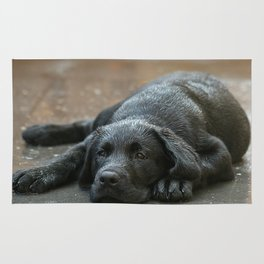 Labrador dog in the rain ! Rug