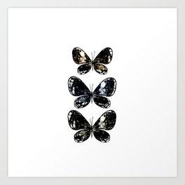 Mottled Moth Art Print